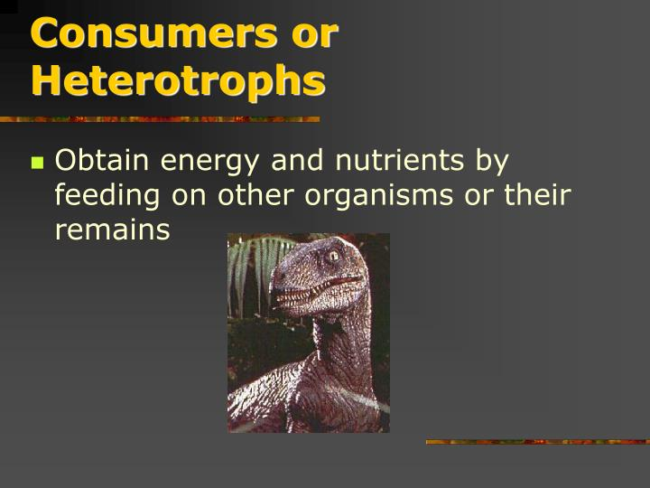 Consumers or Heterotrophs