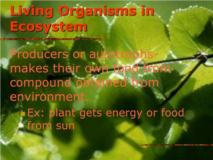 Living Organisms in Ecosystem