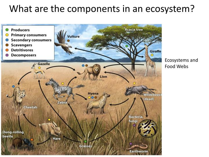 What are the components in an ecosystem?