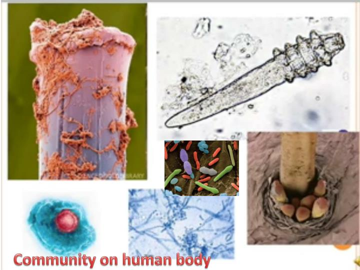 Community on human body