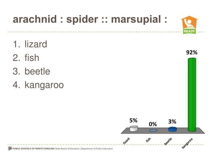 arachnid : spider :: marsupial :