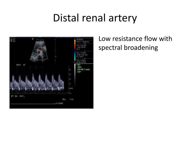 Distal renal artery