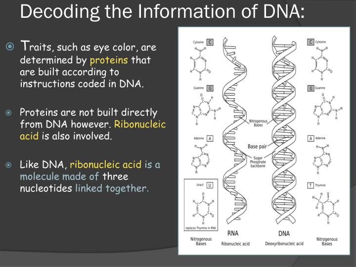 Decoding the information of dna