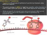 rnas role in translation3