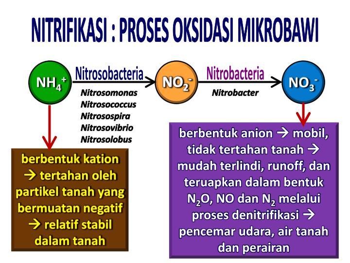 NITRIFIKASI : PROSES OKSIDASI MIKROBAWI