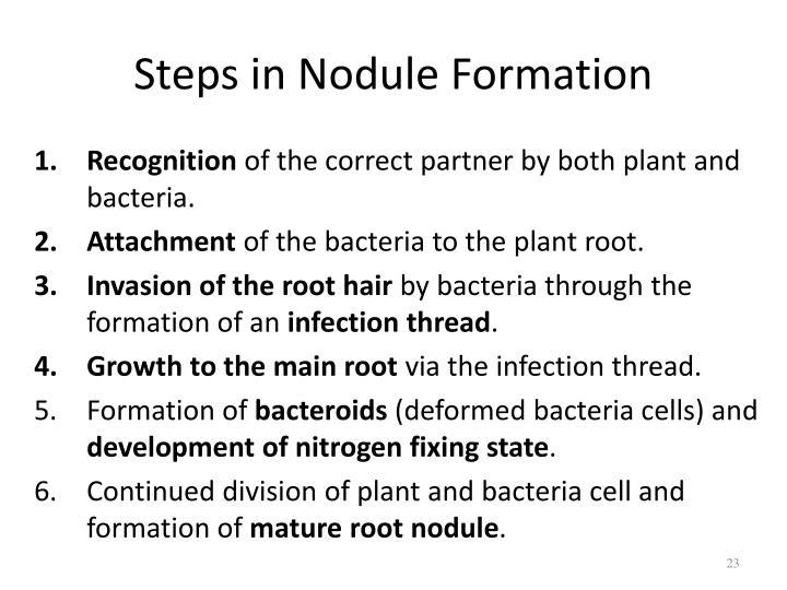 Steps in Nodule Formation