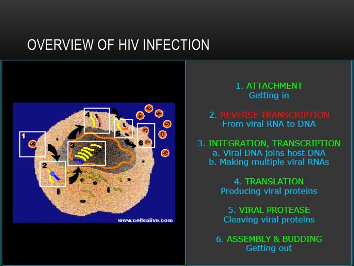 Overview of HIV INFECTION