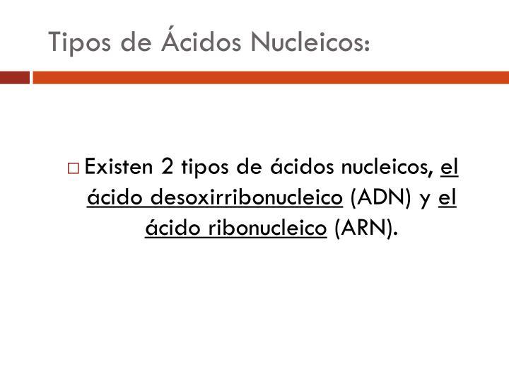 Tipos de Ácidos Nucleicos: