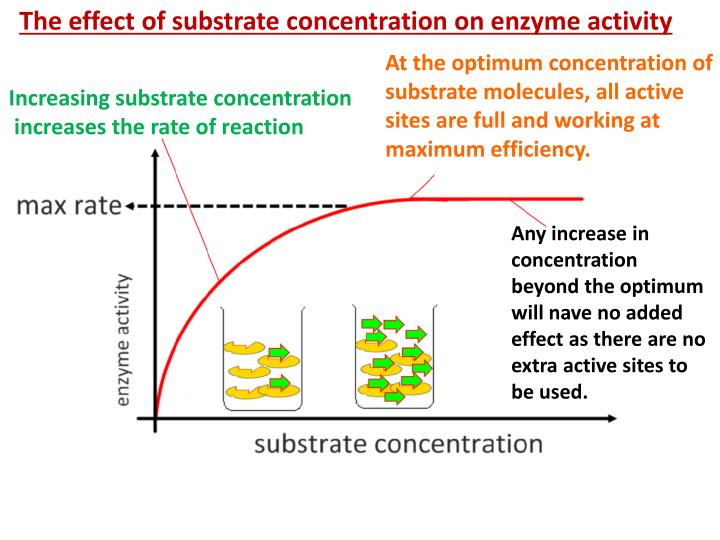The effect of substrate concentration on enzyme activity