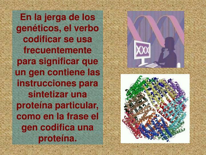 En la jerga de los genticos, el verbo codificar se usa frecuentemente para significar que un gen contiene las instrucciones para sintetizar una protena particular, como en la frase el gen codifica una protena.