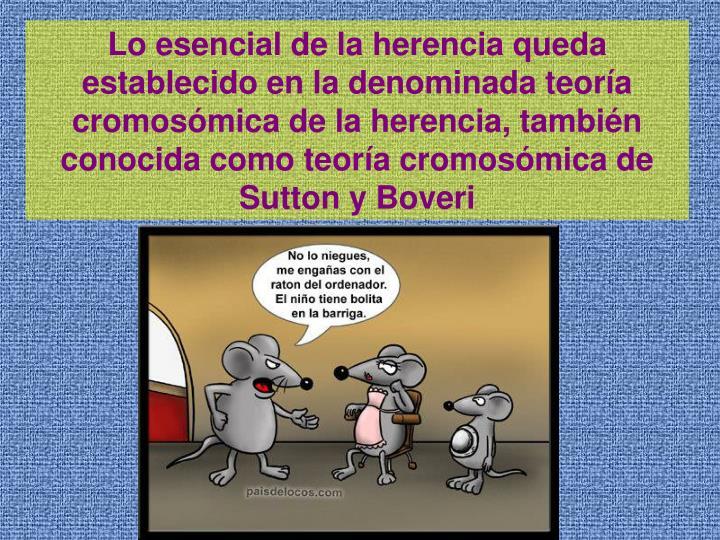 Lo esencial de la herencia queda establecido en la denominada teora cromosmica de la herencia, tambin conocida como teora cromosmica de Sutton y Boveri