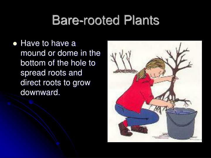 Bare-rooted Plants