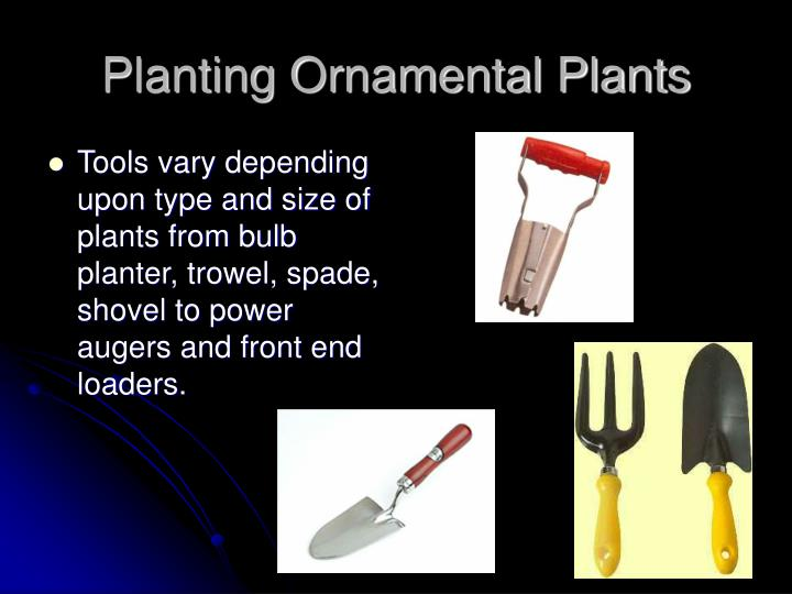 Planting Ornamental Plants