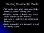 planting ornamental plants2
