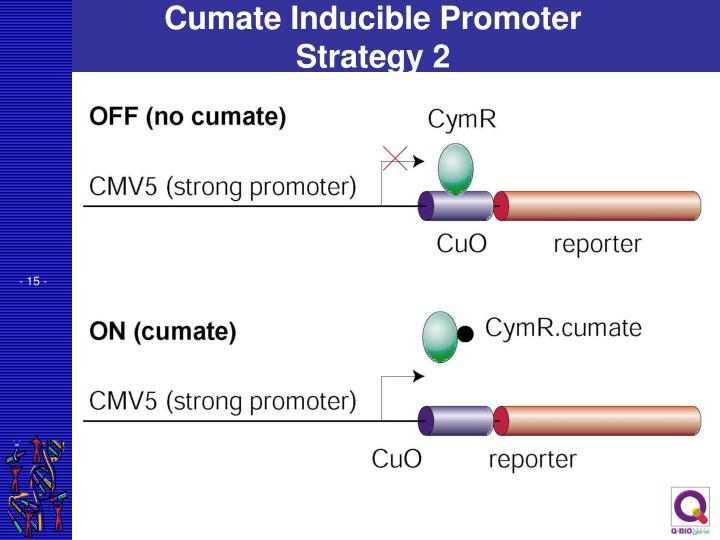 Cumate Inducible Promoter