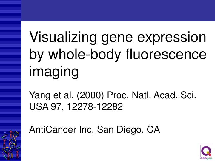 Visualizing gene expression by whole-body fluorescence imaging