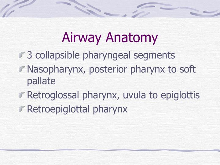 Airway Anatomy