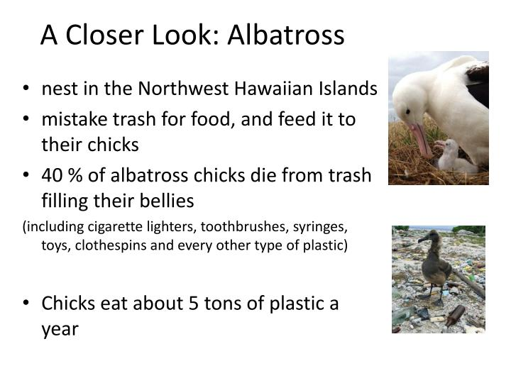 A Closer Look: Albatross