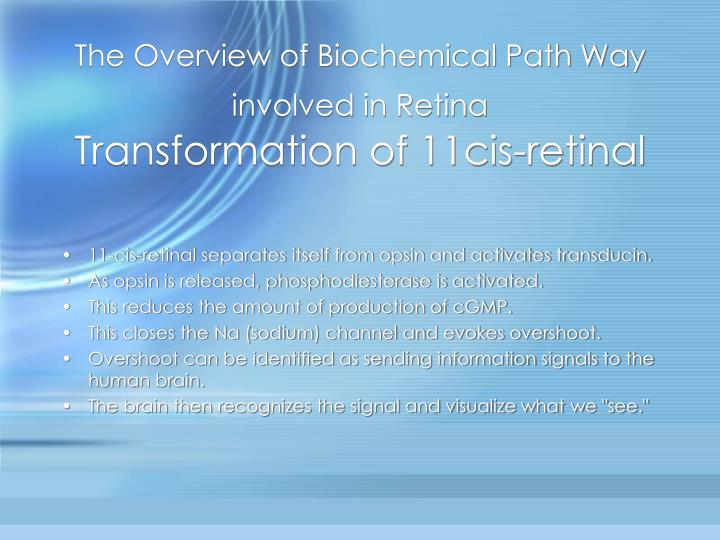 The Overview of Biochemical Path Way involved in Retina