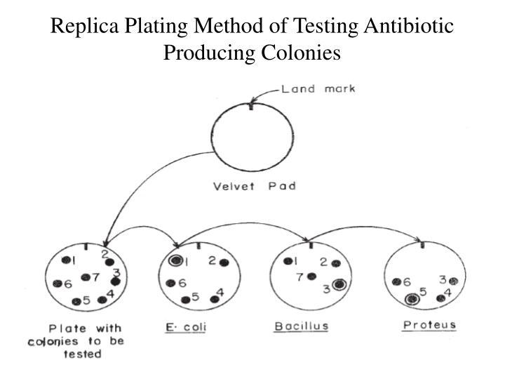 Replica Plating Method of Testing Antibiotic Producing Colonies