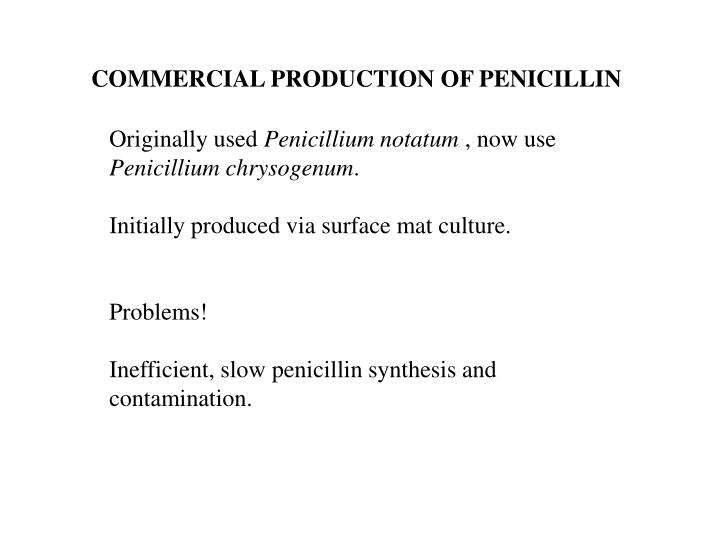 COMMERCIAL PRODUCTION OF PENICILLIN