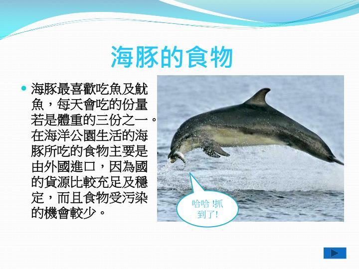 海豚的食物