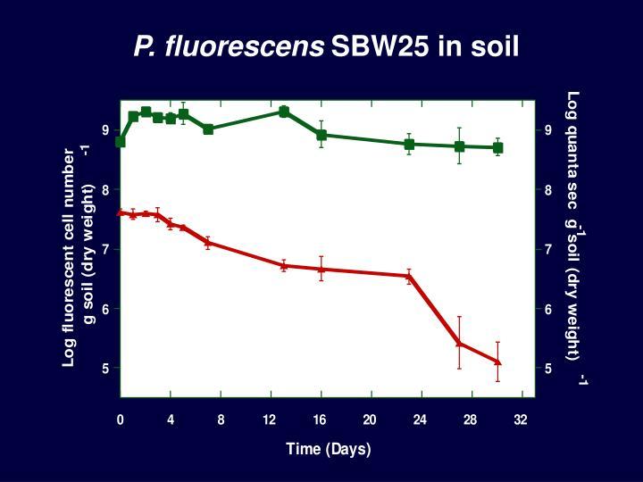 P. fluorescens