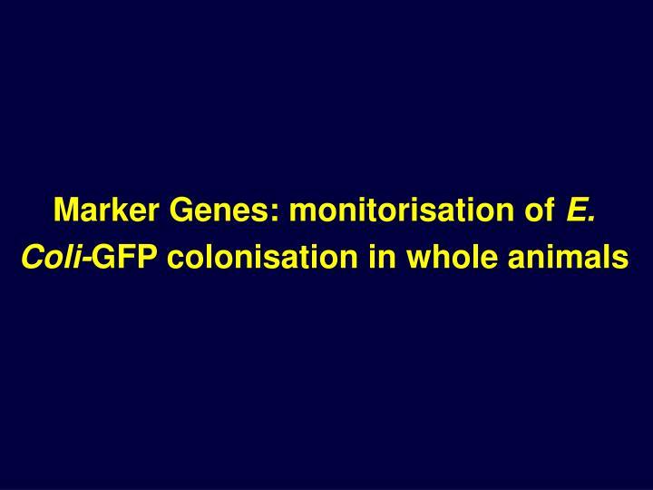 Marker Genes: monitorisation of