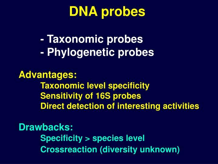 DNA probes