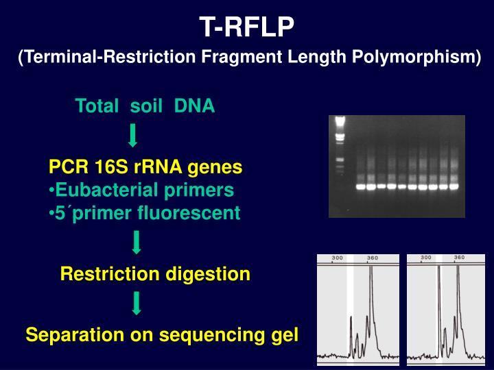 PCR 16S rRNA genes