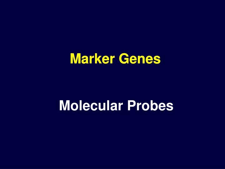 Marker Genes