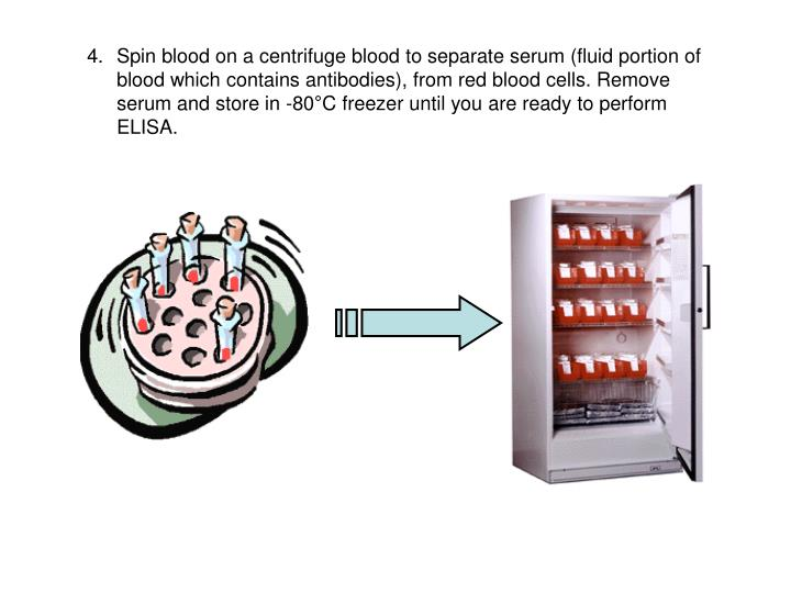 Spin blood on a centrifuge blood to separate serum (fluid portion of blood which contains antibodies), from red blood cells. Remove serum and store in -80