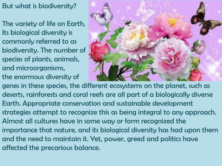 But what is biodiversity?