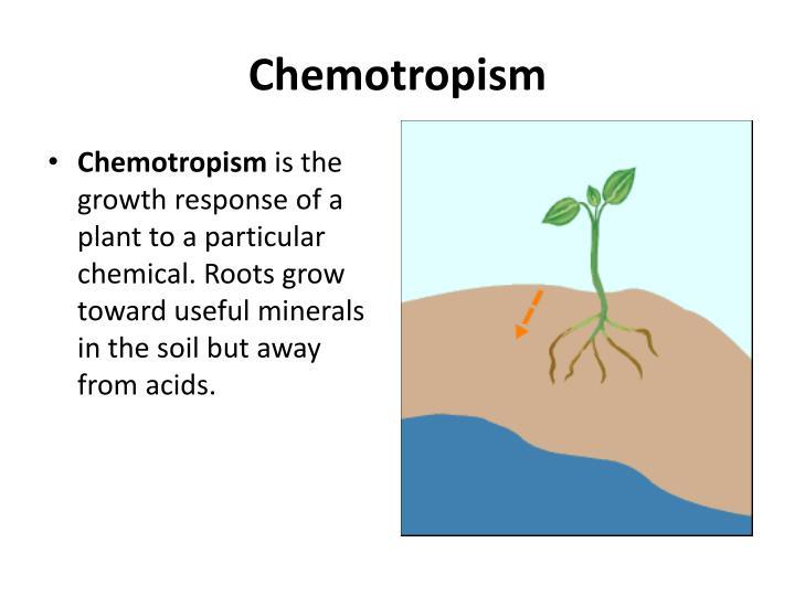 Chemotropism