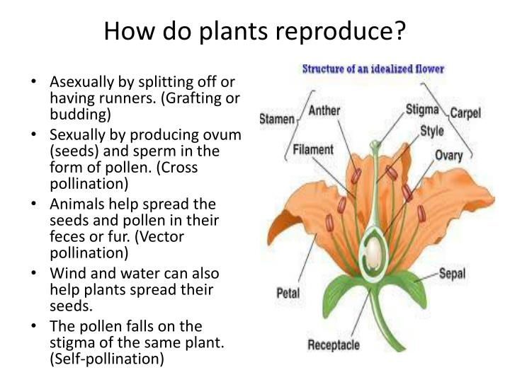 How do plants reproduce?