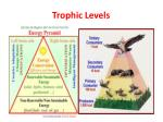trophic levels1