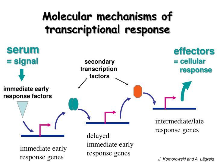 Molecular mechanisms of transcriptional response