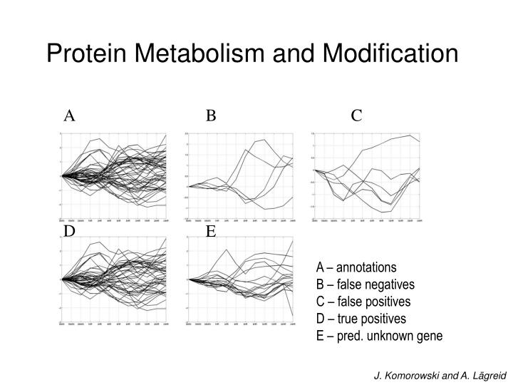 Protein Metabolism and Modification