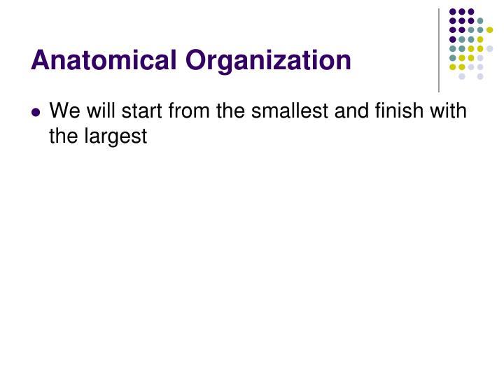 Anatomical Organization