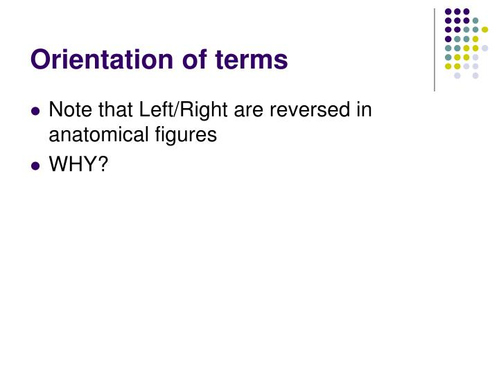 Orientation of terms