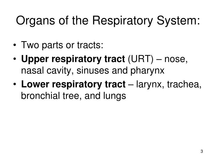 Organs of the Respiratory System: