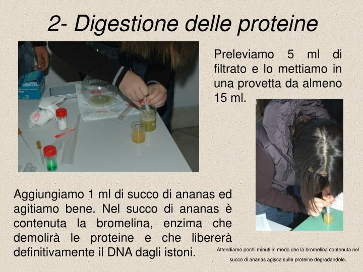 2- Digestione delle proteine