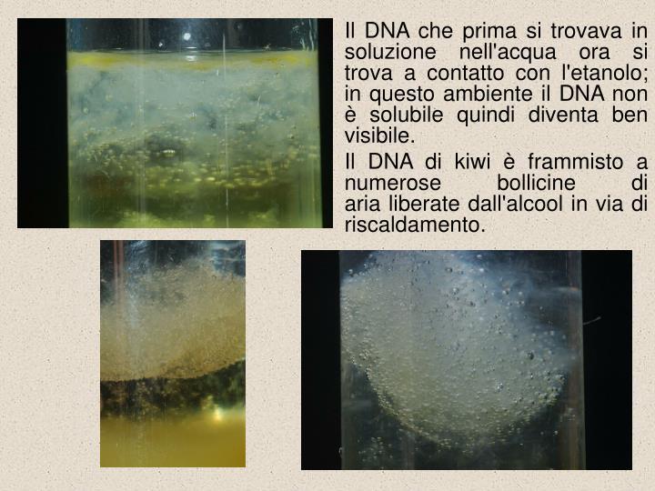 Il DNA che prima si trovava in soluzione nell'acqua ora si trova a contatto con l'etanolo; in questo ambiente il DNA non è solubile quindi diventa ben visibile.