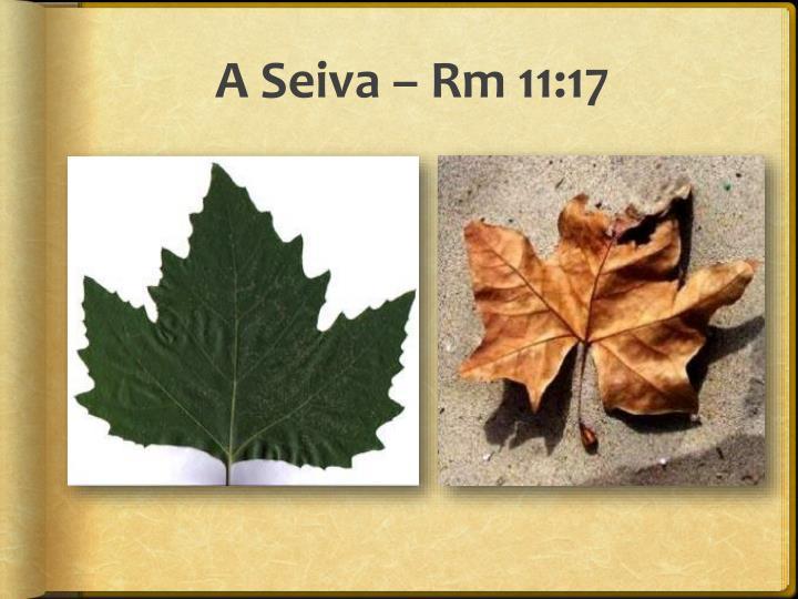 A Seiva –