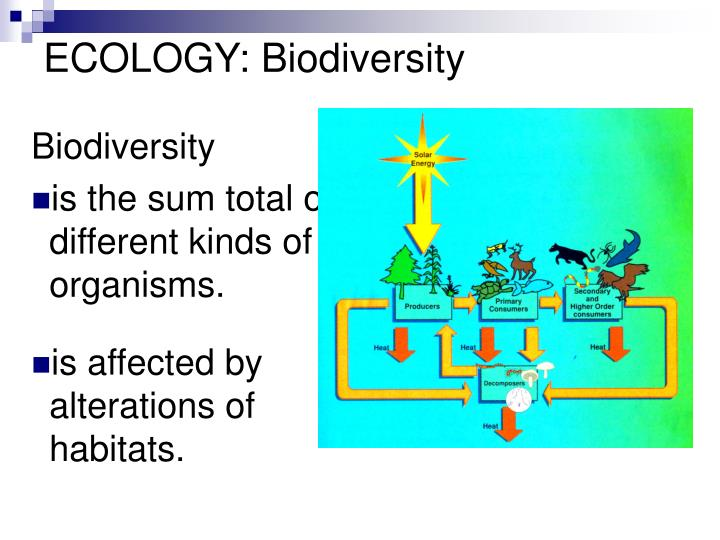 ECOLOGY:
