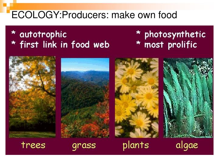 ECOLOGY:Producers: make own food