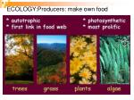 ecology producers make own food