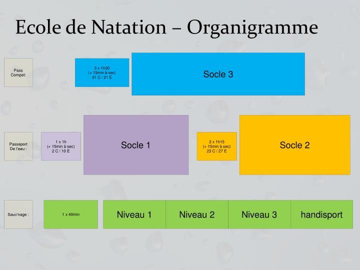 Ecole de Natation – Organigramme
