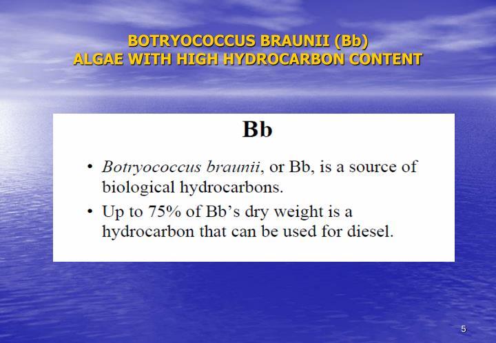 BOTRYOCOCCUS BRAUNII (Bb)