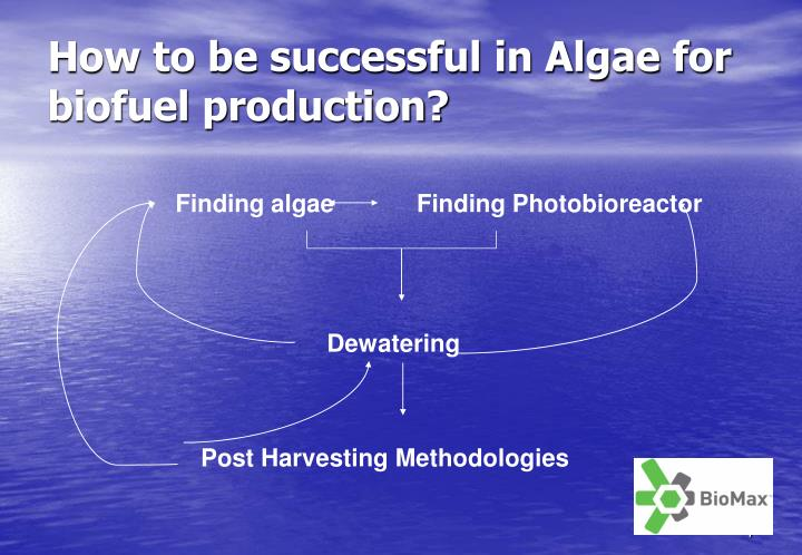 How to be successful in algae for biofuel production